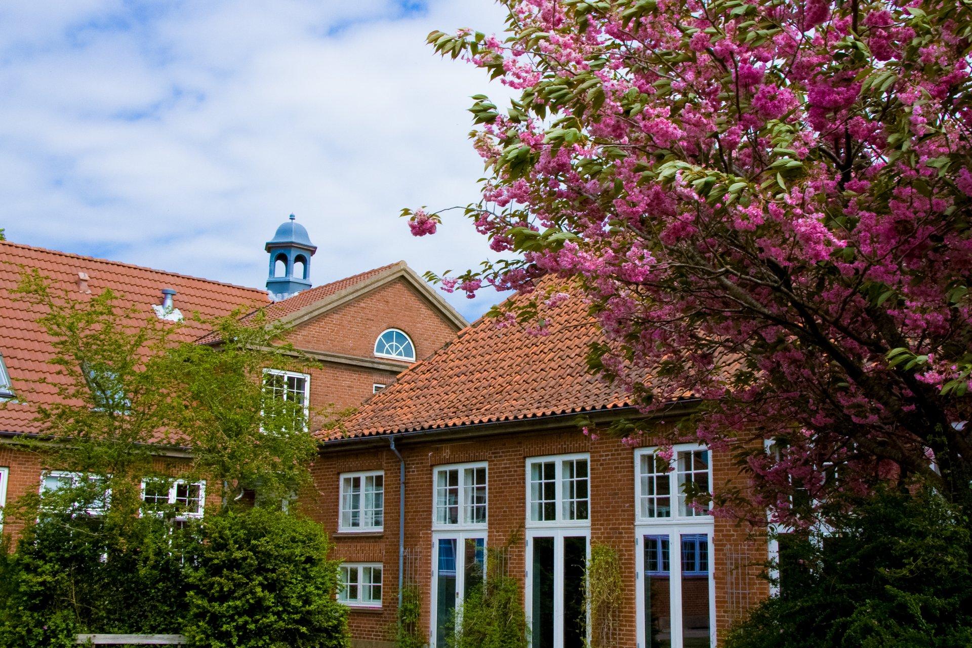 Lunderskov Efterskole set fra syd. De japanske kirsebær blomstrer